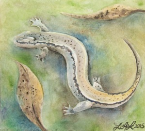 Salamander, watercolor painting