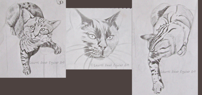 after cat sketches