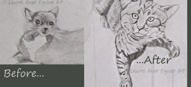 Before and After From Cat Sketch Boot Camp