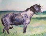 War Chief Courtesy of The Nokota Horse Conservancy®